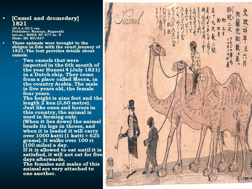 [Camel and dromedary] 1821 30. 5 x 22. 5 cm